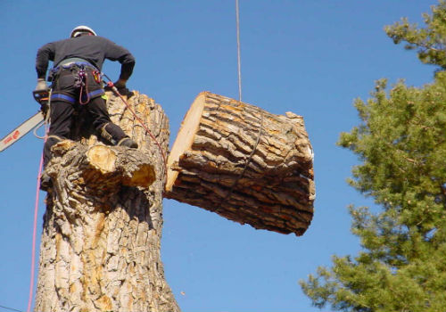 tree removal in hesperia